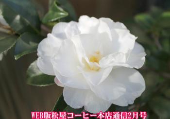 WEB版松屋コーヒー本店通信2月号
