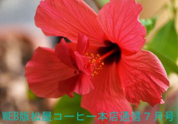 WEB版松屋コーヒー本店通信7月号